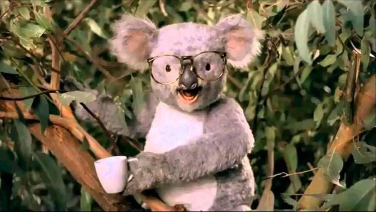 Career Builder Koala